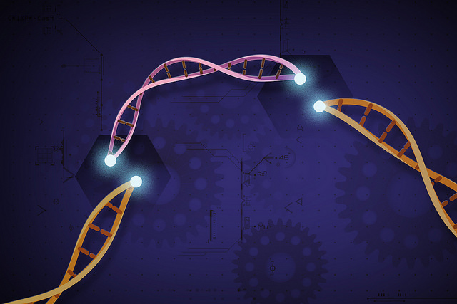 Are gene-editing therapies patentable? A WIPO side event investigates.